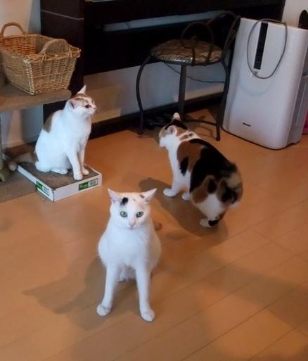 見失う3ネコ