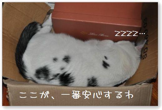 goma box (2)