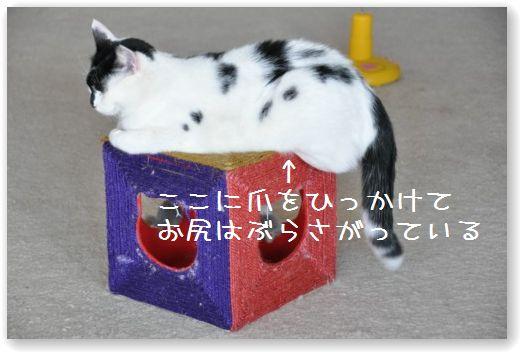 goma cube2