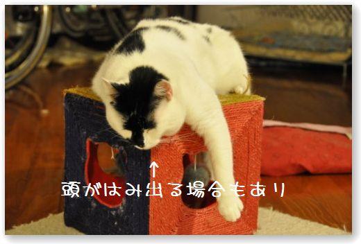 goma cube1