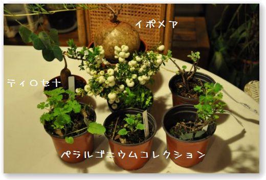 piante aw