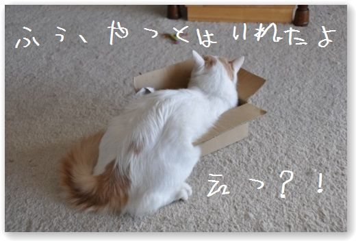 zukko box4