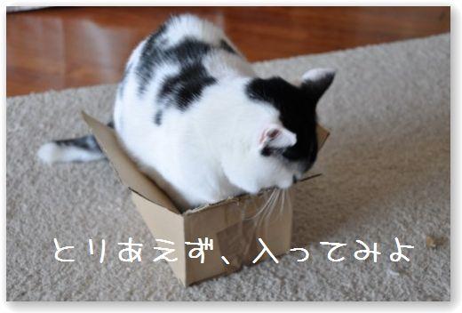goma box1
