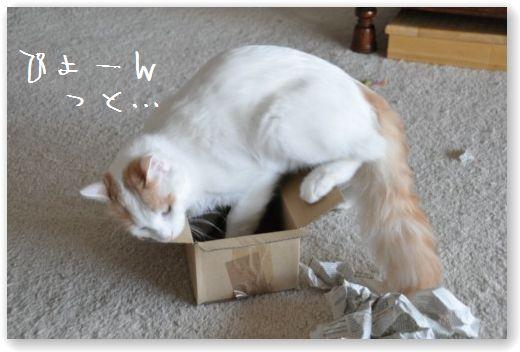 zukko box1-1