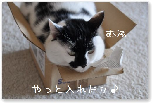 goma box3