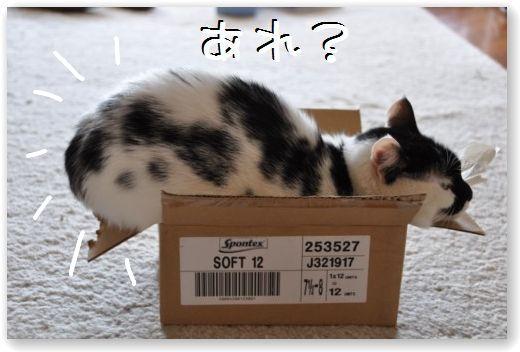 goma box4