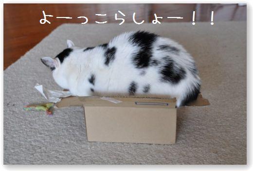 goma box2