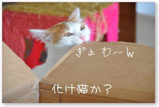 scatola pippi2