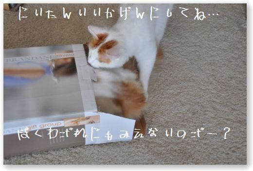 scatola zukko3