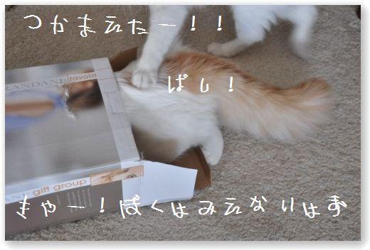 scatola zukko2