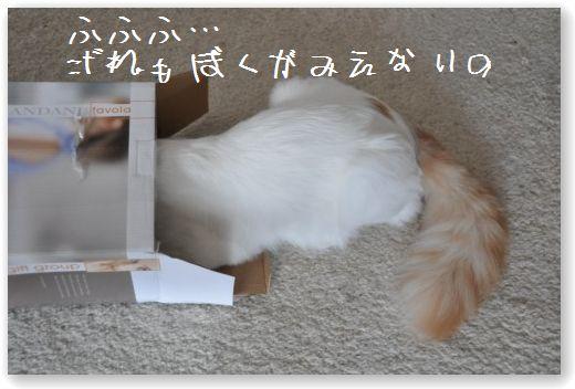 scatola zukko1