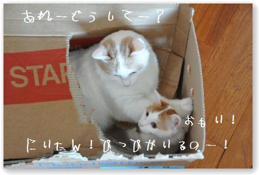 scatola due