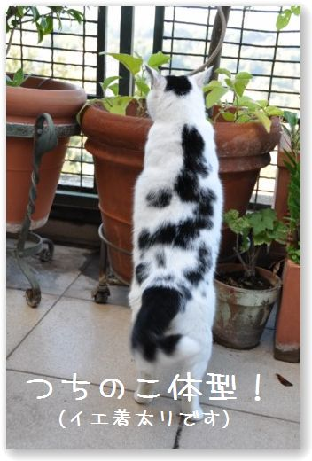 goma tsuchinoko
