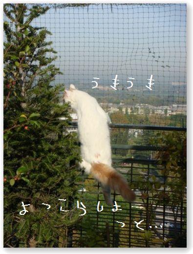 zukko sulla rete (2)