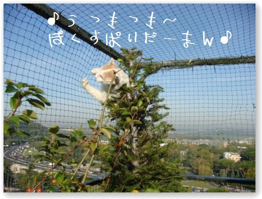 zukko sulla rete