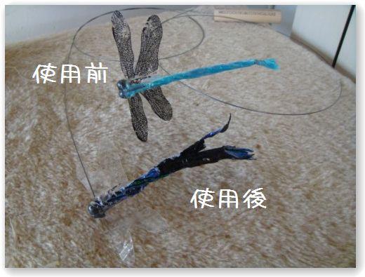 dragonfly dopo