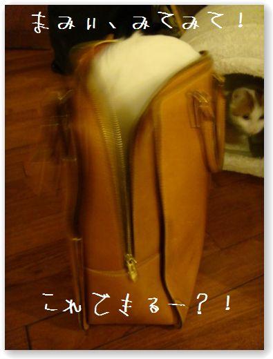 zukko nella borsa2