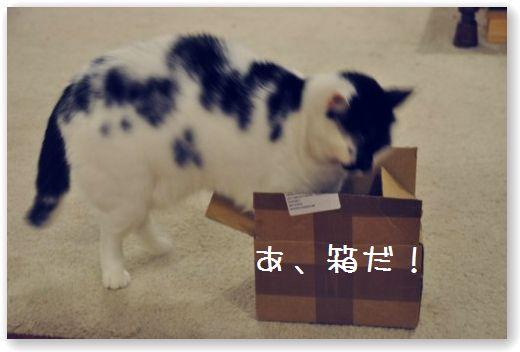 goma scatola1
