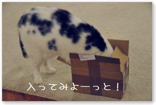 goma scatola2