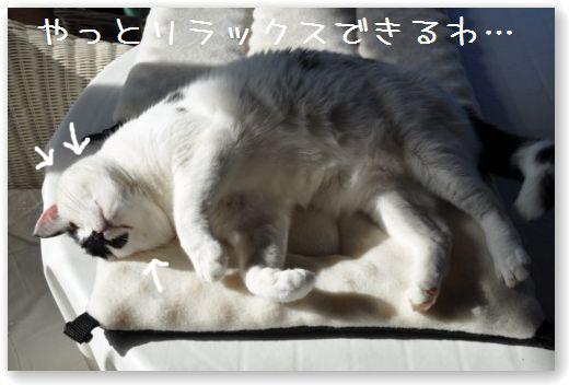 goma dorme4