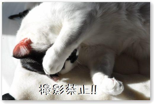 goma dorme3