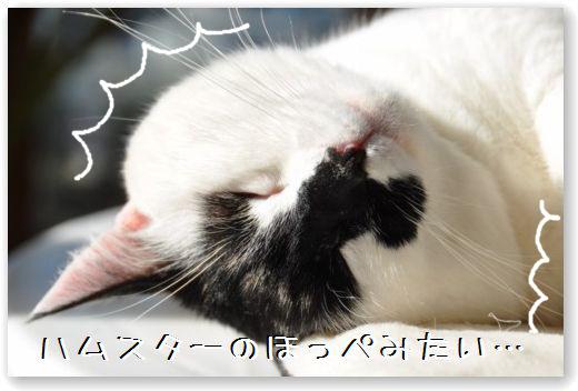 goma dorme2