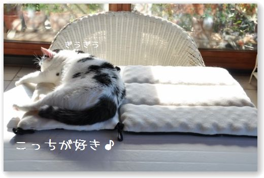 goma dorme1