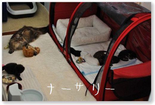 stanza cuccioli []