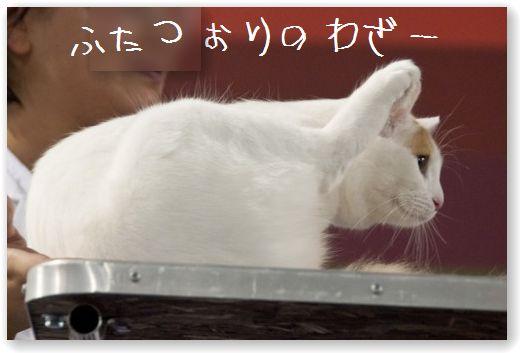 11 (コピー)