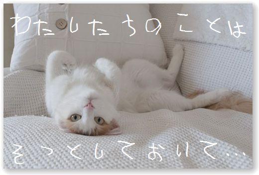 DSC_0325_20111009054841.jpg