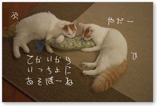 DSC_0891_20110919223806.jpg