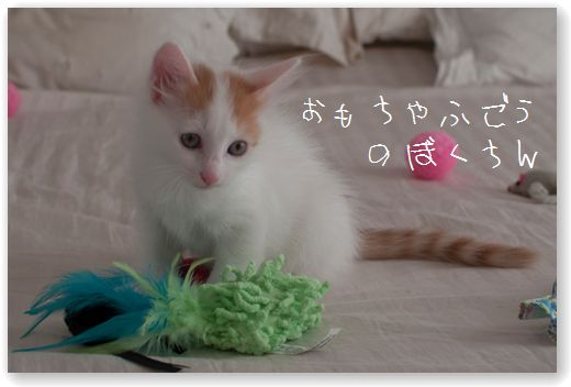 DSC_0900_20110830054536.jpg