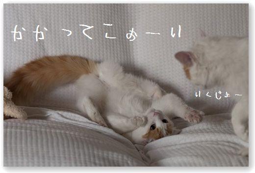 DSC_0945_20110919232321.jpg