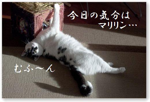 DSC_0947_1.jpg