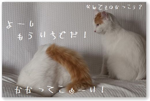 DSC_0947_20110919232320.jpg