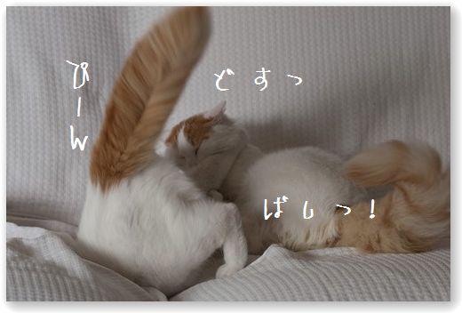 DSC_0953_20110919232730.jpg