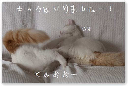 DSC_0954_20110919232730.jpg