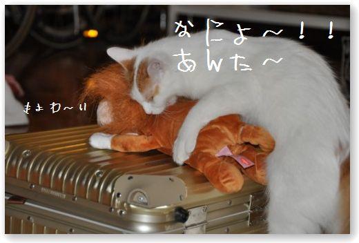 LION-MARU.jpg