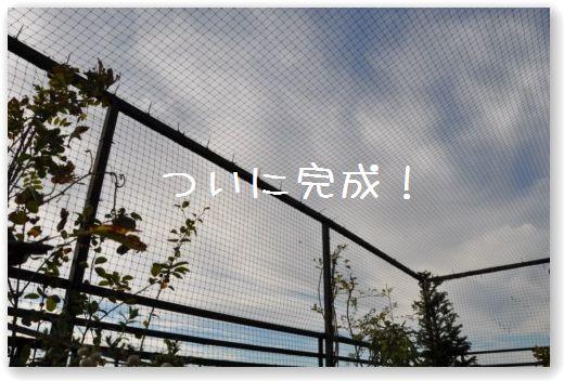 TERRAZZA_20091026002242.jpg