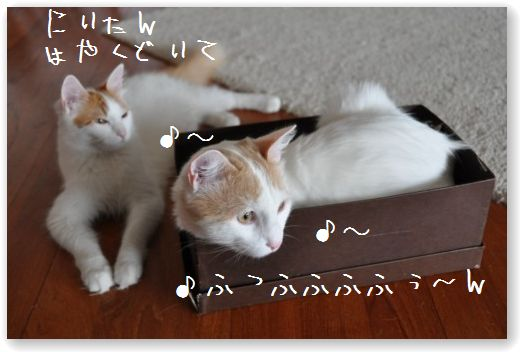 box1_20090917215414.jpg