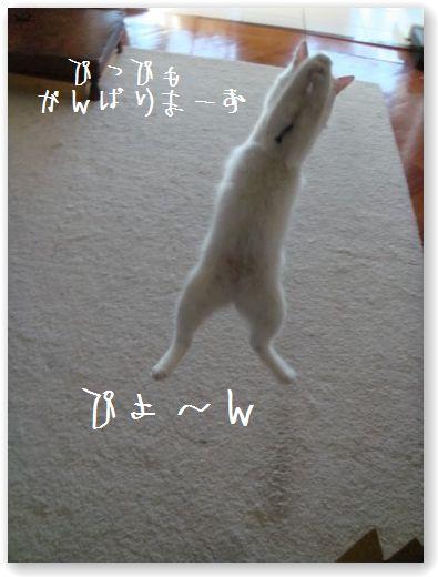 jumping4.jpg
