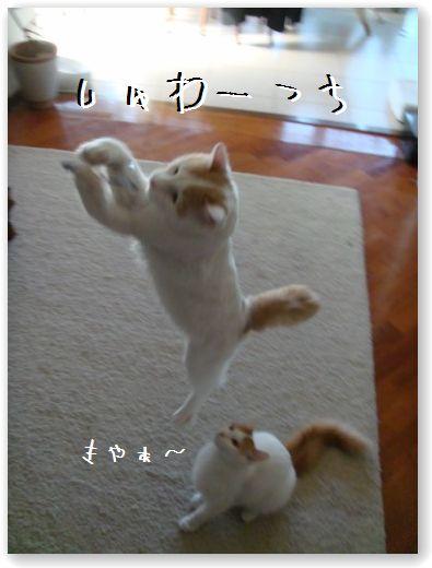 jumping5.jpg