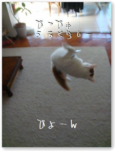 jumping6.jpg