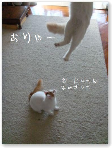 jumping7.jpg