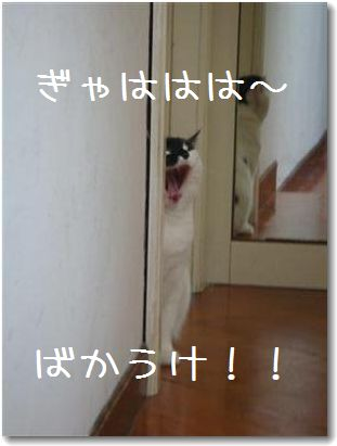 kaseifu2_20090918000225.jpg