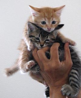 kittens1.jpg