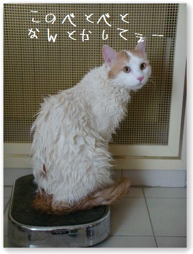 shampooing1.jpg