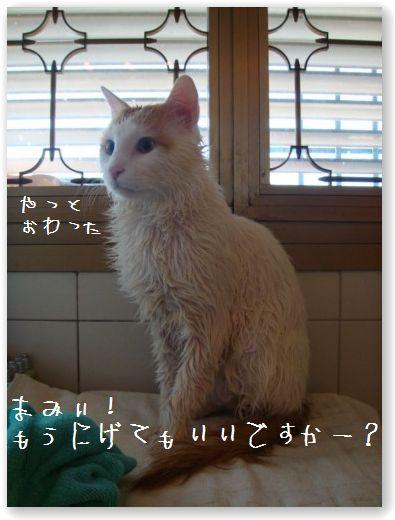 shampooing2.jpg