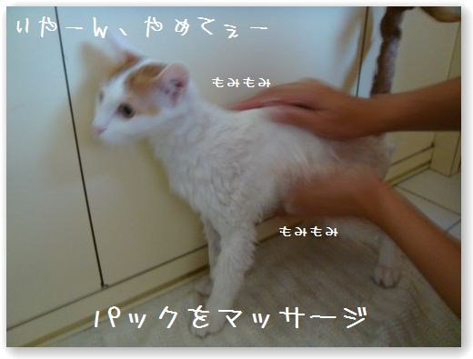 shampooing3.jpg