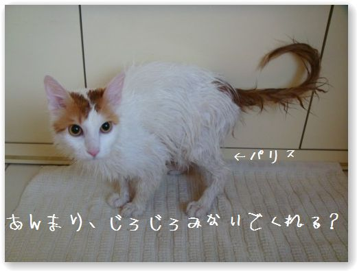 shampooing5.jpg